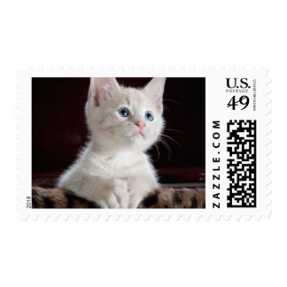 Your Photo Custom Stamps