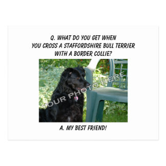 Your Photo! Friend Staffordshire Bull Terrier Mix Postcard