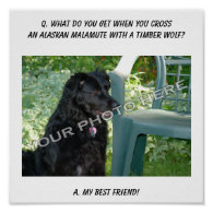 Your Photo Here! Best Friend Alaskan Malamute Mix Posters
