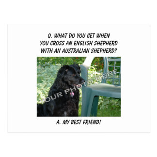 Your Photo Here! Best Friend English Shepherd Mix Postcard