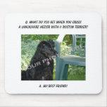 Your Photo Here! Best Friend Lancashire Heeler Mix Mouse Pad