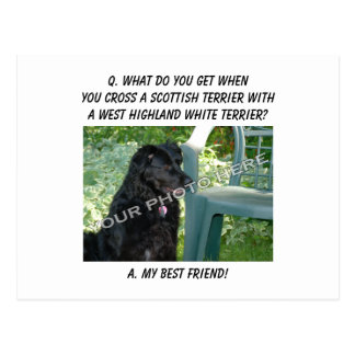 Your Photo Here! Best Friend Scottish Terrier Mix Postcard