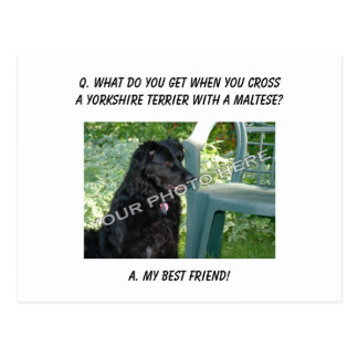 Your Photo Here! Best Friend Yorkshire Terrier Mix Postcard