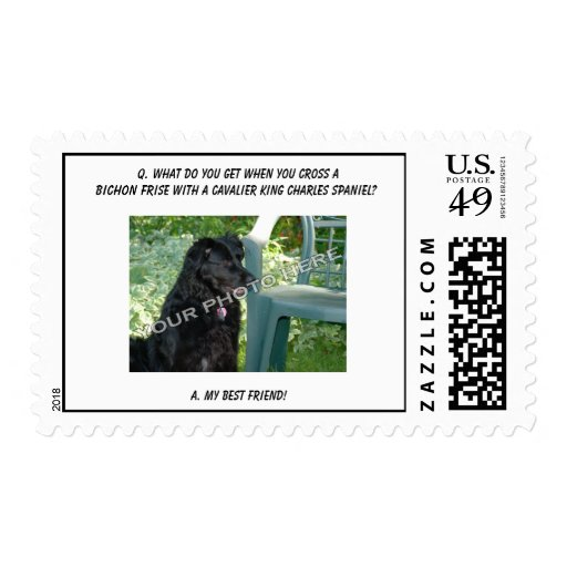 Your Photo Here! My Best Friend Bichon Frise Mix Stamp