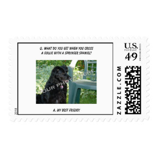 Your Photo Here! My Best Friend Collie Mix Stamps