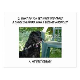 Your Photo Here! My Best Friend Dutch Shepherd Mix Postcard