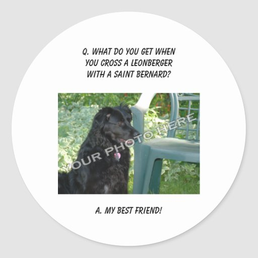 Your Photo Here! My Best Friend Leonberger Mix Round Stickers