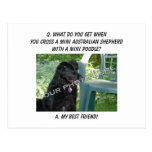 Your Photo Here! My Best Friend Mini Aussie Mix Postcard