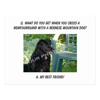 Your Photo Here! My Best Friend Newfoundland Mix Postcard