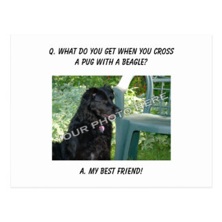 Your Photo Here! My Best Friend Pug Mix Postcard