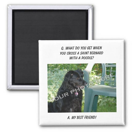 Your Photo Here! My Best Friend Saint Bernard Mix 2 Inch Square Magnet
