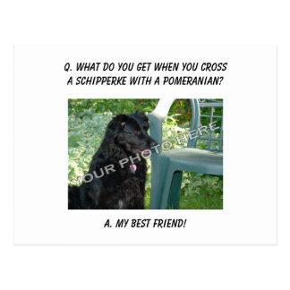 Your Photo Here! My Best Friend Schipperke Mix Postcard
