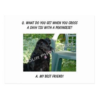 Your Photo Here! My Best Friend Shih Tzu Mix Postcard