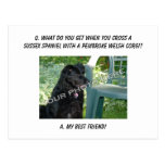 Your Photo Here! My Best Friend Sussex Spaniel Mix Post Cards