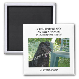 Yorkshire Terrier Poodle Mix Gifts On Zazzle