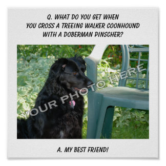 Your Photo Here! My Best Friend Treeing Walker Mix Posters