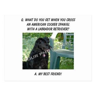 Your Photo! My Best Friend Am. Cocker Spaniel Mix Post Cards