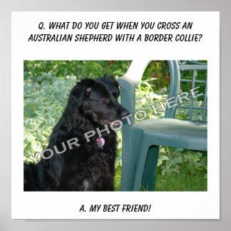 Your Photo! My Best Friend Australian Shepherd Mix Posters