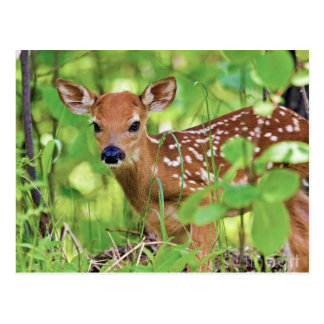 You're a Deer Postcard
