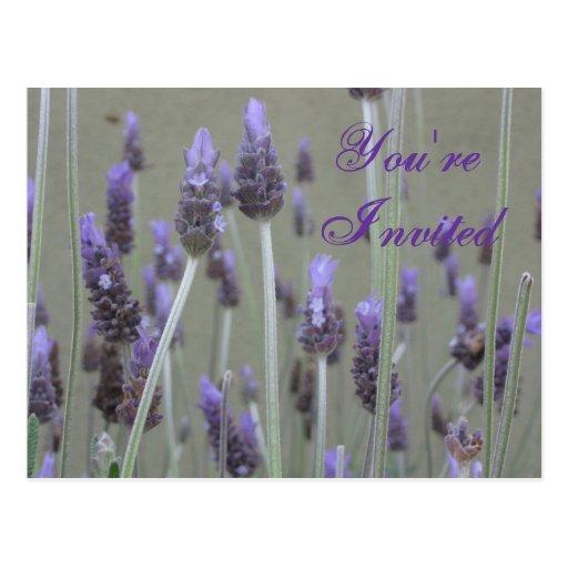 You're Invited Happy Birthday Postcard