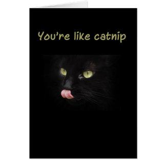 You're like catnip greeting card