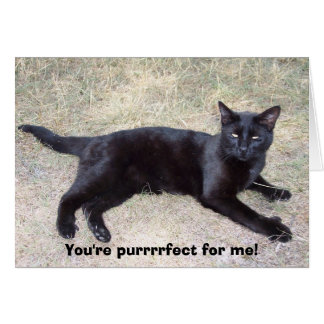 You're purrrrfect for me! card