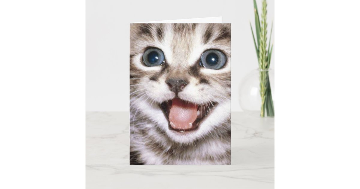 I Cat Even Right Meow Funny Cat Card
