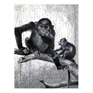 """""""Youth and Experience"""" Vintage Monkey Illustration Postcard"""