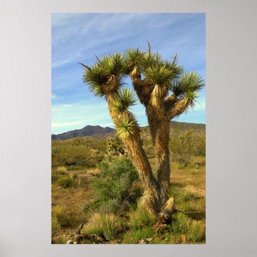 Yuca, brevefolia de la yuca impresiones