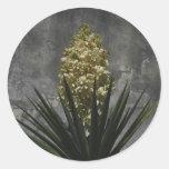 Yuca en la floración etiquetas