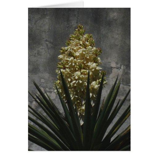 Yuca en la floración felicitación
