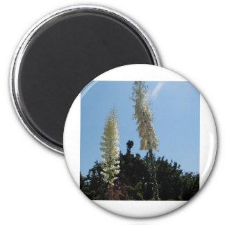 yuca imán redondo 5 cm