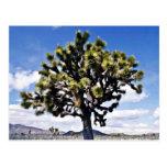 Yuca - parque nacional de la yuca postales