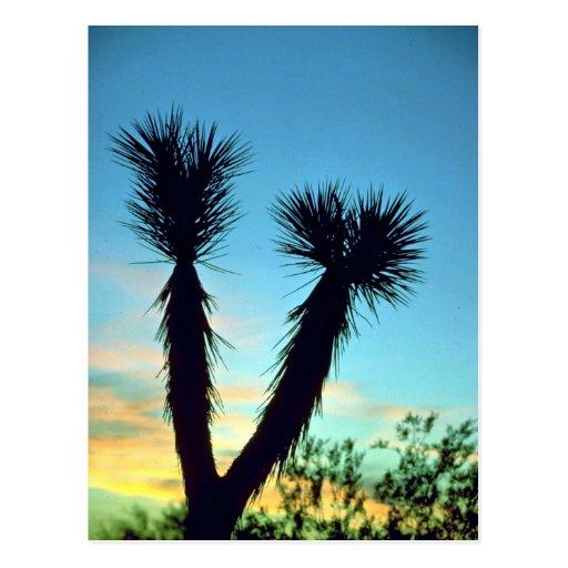 Yucas, desierto del Mohave, desierto de los E.E.U. Postal