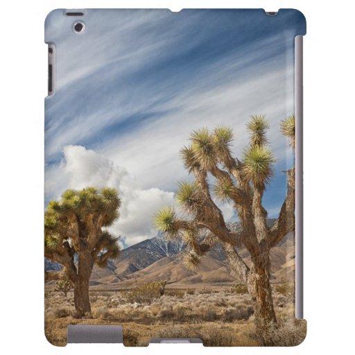 Yucas en desierto