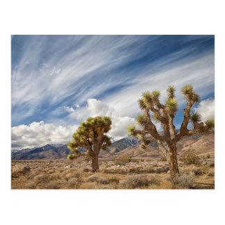 Yucas en desierto postales