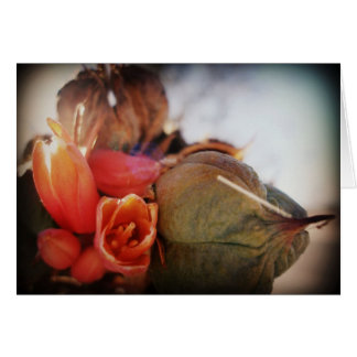 Yucca Blooms Card