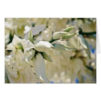 """Yucca Blooms"" Sympathy Card"