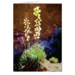 Yucca Flowers in Capitol Reef Greeting Cards