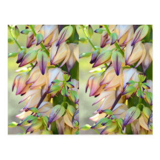 yucca flowers postcard