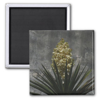 Yucca in Bloom Magnet