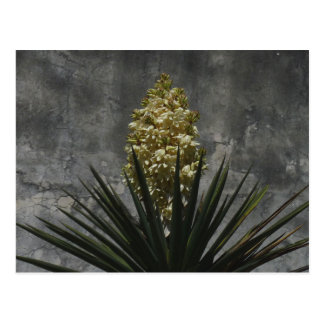 Yucca in Bloom Postcard