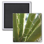 Yucca Leaves Green Abstract Nature Photography 2 Inch Square Magnet