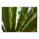 Yucca Leaves Green Abstract Nature Photography Card