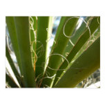 Yucca Leaves Green Abstract Nature Photography Postcard