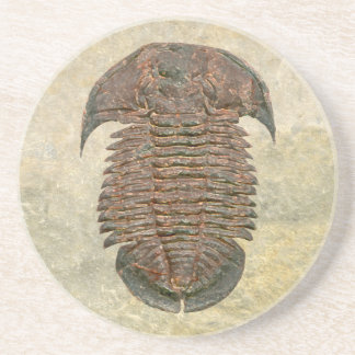 Yuepinquia Fossil Trilobite Beverage Coasters