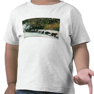 Yukon Dog Team Freighting Through Alaska Canyon Shirts