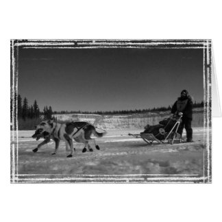 Yukon Quest Close-Up; No Text Card