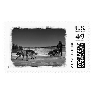Yukon Quest Close-Up; No Text Postage