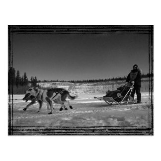 Yukon Quest Close-Up; No Text Postcard